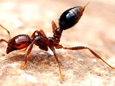 Fire Ant Control Services