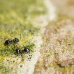 Ants_control_Mega_pest