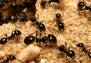 Hidden Horrors that can be detected by the Professional Home Inspectors ant