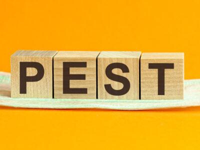 Pest Problem in Spring